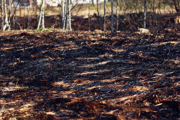 Burn dry grass in forest background close-up