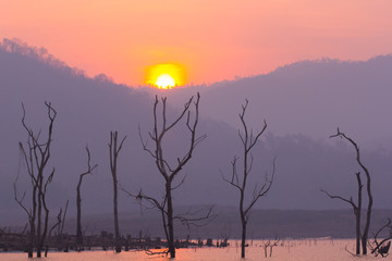Dry tree in Mawngad Dam with sun, Chiangmai Thailand, lanscape