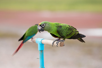 Parrot on a branch