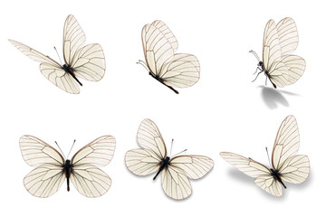 six white butterfly