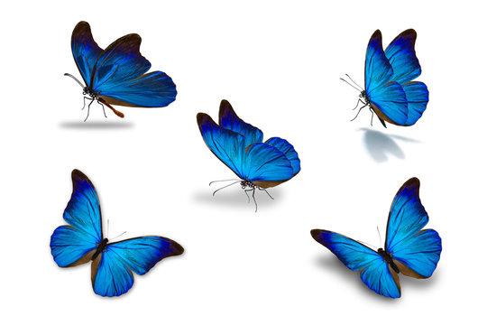 fifth blue butterfly