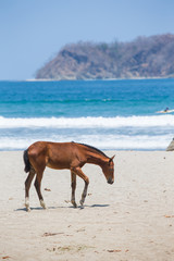 Horse on the Beach in Samara, Costa Rica