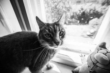 пушистый кот возле окна