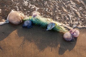 La morte del mare