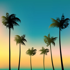 Palms against the sky. Tropical background. Palm leaves.