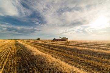 Foto auf Gartenposter Landschappen Pouring wheat grain into tractor trailer after harvest