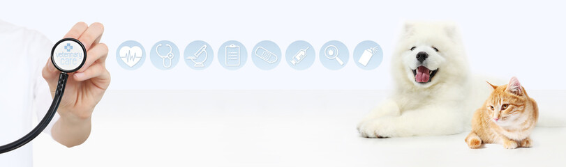 veterinary care concept. hand with stethoscope, dog and cat with graphic symbols isolated on white background
