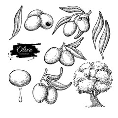 Olive set. Hand drawn vector illustration of branch with food, tree, oil drop. Isolated drawing on white background.