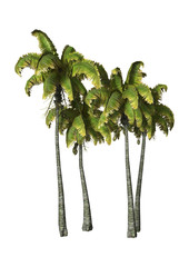 3D Rendering Coconat Palm Trees on White