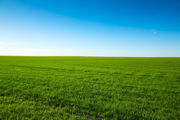 Perfect landscape with field with green grass and blue sky on a clear sunny day