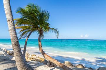 Foto auf AluDibond Karibik Palmen Punta Cana Bavaro Strand Dominikanische Republik