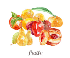 fruits illustration. Hand drawn watercolor on white background.