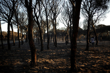 A man takes photographs at a burnt area following a forest fire near Donana National Park, in Matalascanas