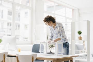 Businesswoman in office taking care of bonsai tree