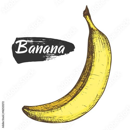 Sketch Ink Colorful Vintage Banana Illustration Draft Silhouette