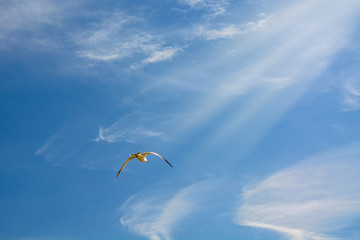 high blue sky flying white seagulls hovering over the sea.