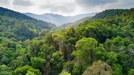Rainforest aerial view in Thailand
