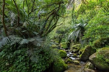 Wild wet jungle in Taiwan