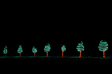 Line of Lighted Christmas Trees in the Dark