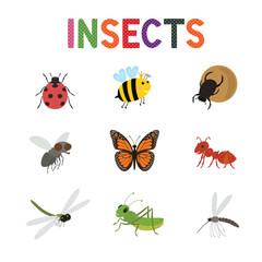 Funny insects, cute cartoon bugs vector set. Colored insects bee butterfly and ladybird,