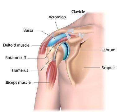 Shoulder joint structure, labeled.