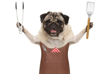 Aluminium Prints Grill / Barbecue smiling pug dog wearing leather barbecue apron, holding meat tong and spatula, isolated on white background