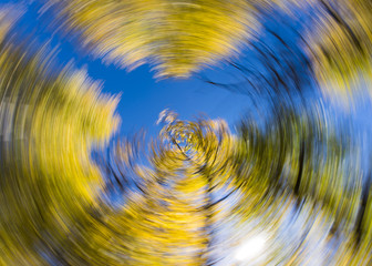 Colorful aspen trees photographed with creative spin effect during fall near Aspen, Colorado.