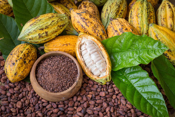 Ripe cocoa pod and nibs, cocoa beans setup background