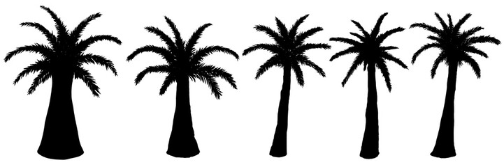 Set of vector silhouettes of palm trees on a white background.