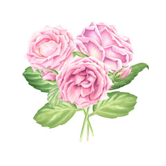 Hand-drawn watercolor pastel pink roses bouquet with green leaves, floral botanical illustration isolated on white background.