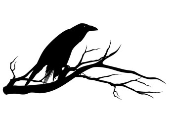 black raven bird sitting on tree branch - halloween theme vector silhouette design