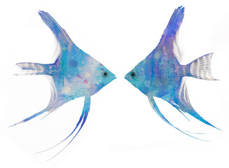 fish - aquarell picture
