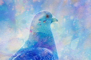 pigeon - photo with add watercolors texture