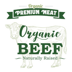 Hand drawn cow label with text organic beef, vector