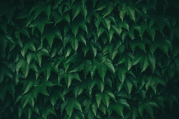 Geometric green leaves texture