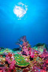 Under the sea with beautiful corals. Similan,North Andaman Sea