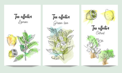 Vertical vector banners of hand drawn tea collection. Citrus, green tea, lemon. An idea for design, invitation, save the date card.