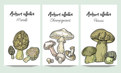 Vertical vector banners of hand drawn mushrooms collection. Morels, porcini, champignions. An idea for design, invitation.
