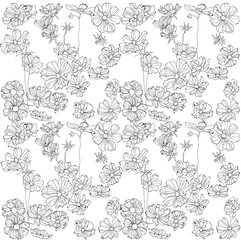 Vector ornament pattern gentle black and white flowers chamomile and cosmeus fine openwork line coloring picture