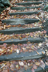 Autumn trees leaves and wooden stairs in a forest