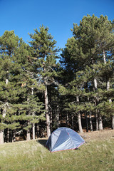 Gray camping tent in pine trees forest