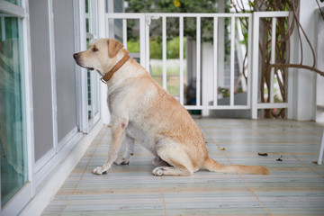 A dog is waiting to enter a house