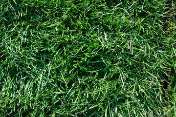 Green grass. Bright summer backgrounds