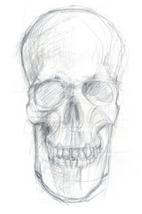 frontal skull sketch