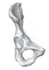 hip bone front view