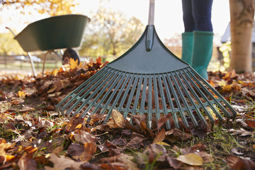 Close Up Of Woman Raking Autumn Leaves In Garden