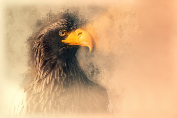 Steller's sea eagle sketch. Digital illustration