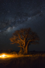 Campfire under baobab trees and milkyway