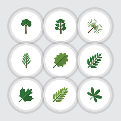 Flat Icon Bio Set Of Rosemary, Leaves, Maple And Other Vector Objects. Also Includes Tree, Jungle, Willow Elements.