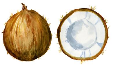 coconut slice watercolor hand drawn illustration